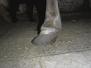 Laminitic Pony